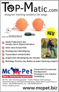 Agility-WM-Endqualifikation